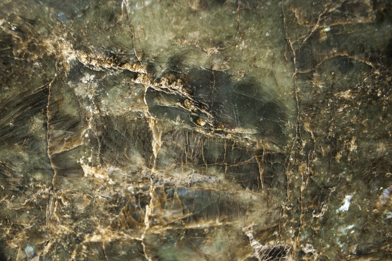 Labrador Green (2)